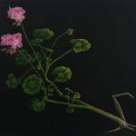 geranium - 44x40cm - olieverf op doek