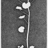 geranium meteoor 46 - 40x 139cm - pen op papier - 2014_0